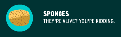 https://www.brainpop.com/science/diversityoflife/sponges/